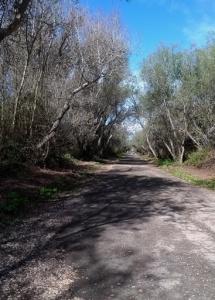 Oso Flaco trail