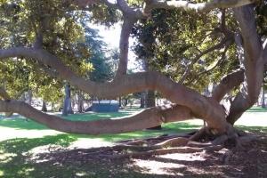 park tree l
