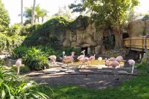SB flamingos