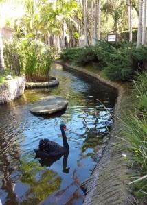 Swan at zoo entrance