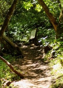 Buceye trail m 2095