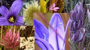 flower collage 2
