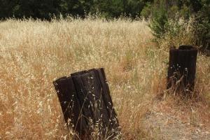 Grasses m 2146
