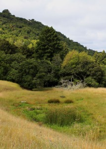 meadow pond m