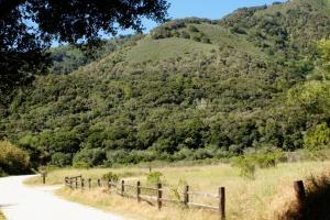 Meadow trail m 2074