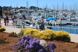 Monterey boat harbor 2046
