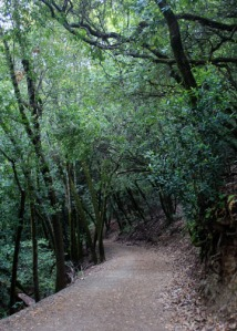 SM trail