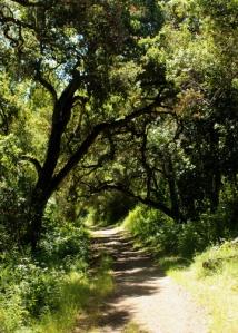 trail m 2105
