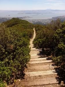 Mt Tam step trail east