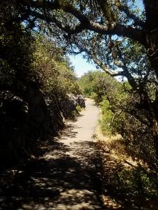Trail shade Mt Tam