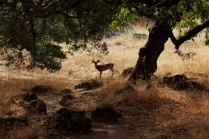 7-15 Taylor Mtn deer