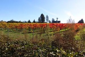 11-14 view to vineyard