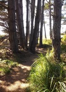 PB trail