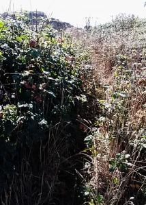 SB poison oak trail
