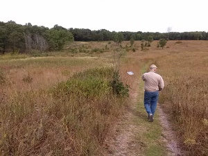 Crane wetland walk