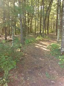 Leopold woods