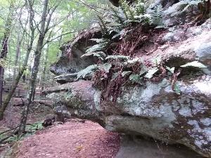 M rock w fern