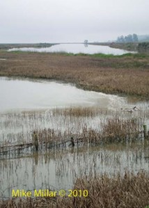 Wetland to Petaluma River