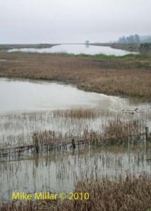 Wetland to Petaluma River