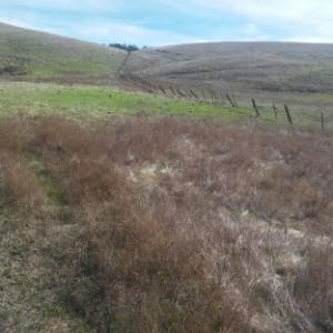 10 meadow