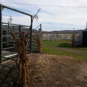 19 barnyard