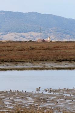 7 wetland mudflat