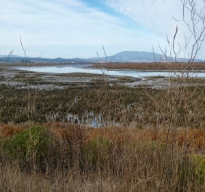 7a wetland