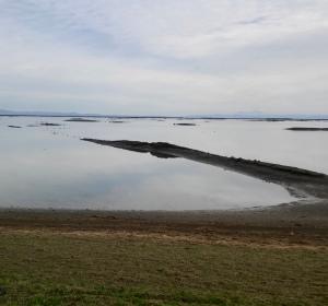 wetland spur