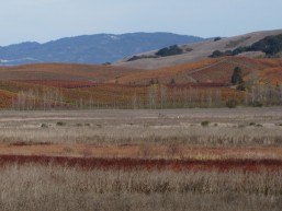 Vineyards Tolay D