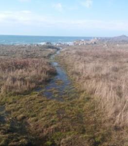 Salt Point coastal trail sog c