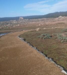 Salt Point new trail north d