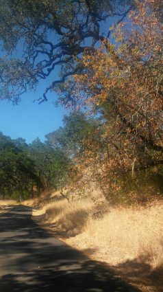 Sonoma Valley Regional trail