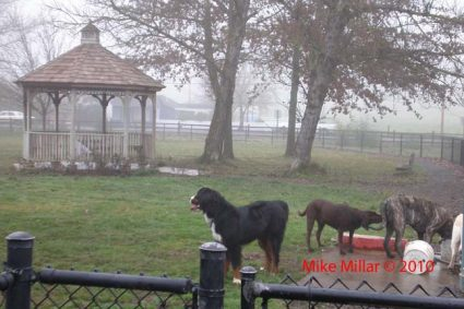 Liz Perrone Dog Park