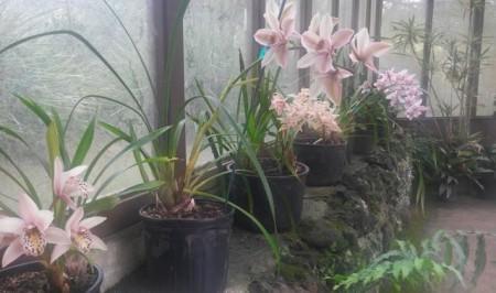 Kula orchid house