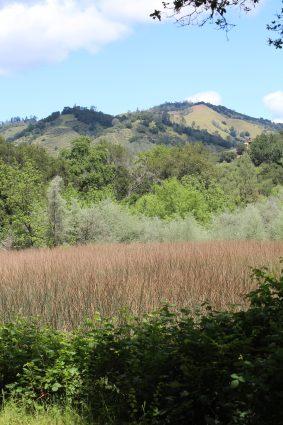 wetland along Moore Creek m