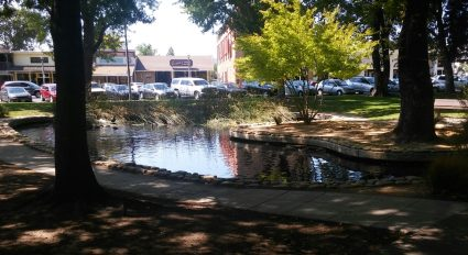 Sonoma Plaza duck pond